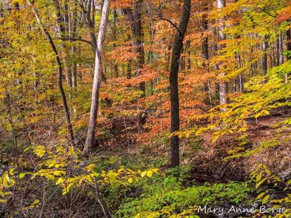 Alexauken Wildlife Management Area, West Amwell, New Jersey