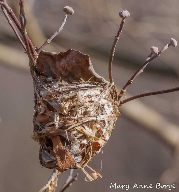 Bird's nest made from plant materials and wasp nest paper