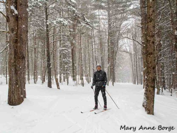 Cross Country skier in the woods, Trapp Family Lodge, Stowe, Vermont