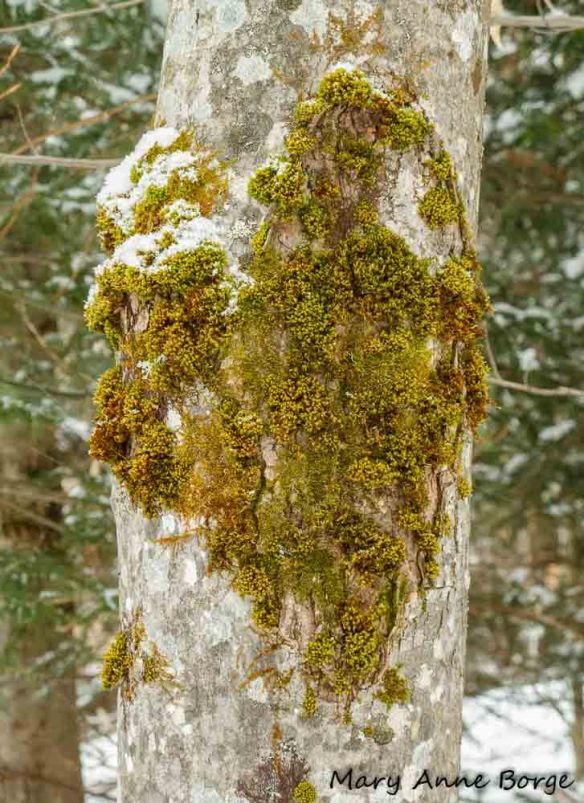 Moss on tree bark