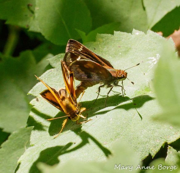 Zabulon Skippers, mating